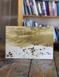 Picture on Wood: Goats on Dead Sea Road