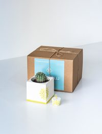 Succulent Pot with Matching Cardholder