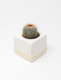 Square Plant Pot - Gold Stripe